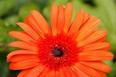 Thaise bloem Stock Foto's