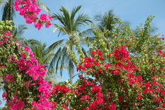 Thaise bloemen en palm Royalty-vrije Stock Foto's