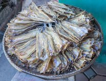 Thaise gezouten makreel Royalty-vrije Stock Fotografie