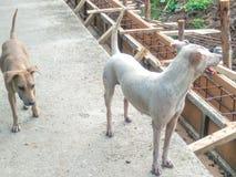 Thaise honden Royalty-vrije Stock Afbeeldingen