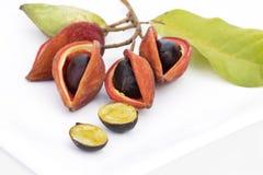 Thaise kastanje of Chinese kastanje en zeven zusters` fruit op wh stock afbeelding
