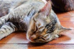 Thaise Kat op houten vloer en onduidelijk beeldachtergrond Royalty-vrije Stock Fotografie