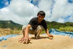 Thaise landbouwer die padie voor zon het drogen op de vloer harken Stock Fotografie