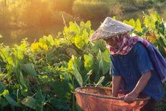 Thaise landbouwerslevensstijl Stock Foto