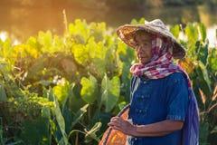 Thaise landbouwerslevensstijl Stock Fotografie