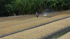 Thaise mensen die het water geven werken aan installatie en groente in tuin stock footage