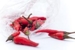 Thaise roodgloeiende Spaanse pepers op de witte achtergrond, Roodgloeiende Spaanse pepersisol Stock Afbeeldingen