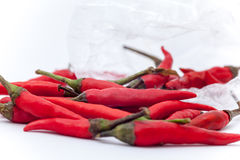 Thaise roodgloeiende Spaanse pepers op de witte achtergrond, Roodgloeiende Spaanse pepersisol Royalty-vrije Stock Fotografie