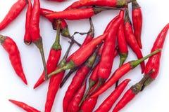 Thaise roodgloeiende Spaanse pepers op de witte achtergrond, Roodgloeiende Spaanse pepersisol Royalty-vrije Stock Foto