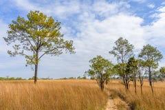 Thaise Savanne bij het Nationale Park van Thung Salaeng Luang Royalty-vrije Stock Foto's
