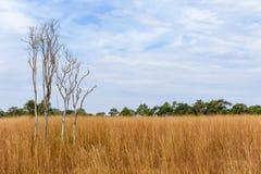 Thaise Savanne bij het Nationale Park van Thung Salaeng Luang Royalty-vrije Stock Fotografie