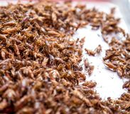 Thaise traditionele voedselsprinkhanen, larven Royalty-vrije Stock Foto's
