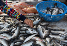 Thaise vrouw die verse vissen kiezen bij de lokale markt in Thailand Stock Afbeeldingen