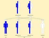 Thalassemia patroon van overerving Stock Fotografie