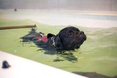 thalassotherapy的狗 图库摄影