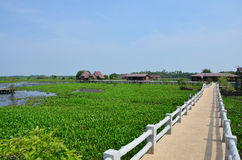 Thale Noi lake and Waterfowl Park at Phatthalung Province Thailand. Thale Noi Non-hunting Area royalty free stock image