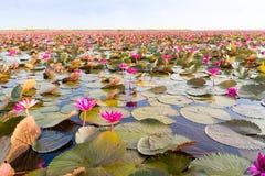 Thale Noi Stock Images