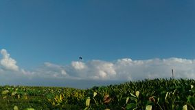 Thalenoi phattalung Thailand van de landschaps bluesky witte wolk stock fotografie