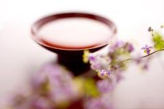thalictrum de raison de rochebrunianum photographie stock libre de droits