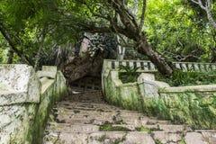 Tham окрашивает пещеры Стоковые Изображения RF