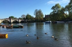 River Thames at Richmond, London. Riverside view of River Thames in Spring Stock Photos