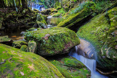 Thamsor nuo Waterfall Phukradueng National Park Stock Images