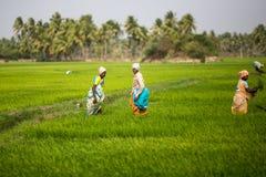THANGAUR, ИНДИЯ 13-ОЕ ФЕВРАЛЯ: Индийский работник 13-ого февраля 2013 Стоковое Изображение RF