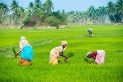 THANJAVOUR,印度- 2月13 :未认出印地安rura 免版税库存图片