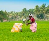 THANJAVOUR,印度- 2月13 :未认出印地安rura 免版税库存照片