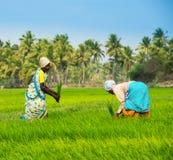 THANJAVOUR, INDIA - FEBRUARI 13: Niet geïdentificeerd Indische rura Stock Afbeeldingen