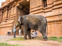 THANJAVOUR, LA INDIA - 13 DE FEBRERO: Un elefante bendice el unidentifie Imagen de archivo