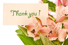 Thank you. Thanks for the beautiful backdrop of pink flowers Stock Photo