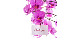 Thank You ! Royalty Free Stock Images