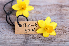 Thank You. Label with Thank you and yellow narcisses in the Background Stock Images