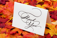 Thank You. Card on leaves with copy space royalty free stock photo