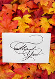 Thank You. Card on leaves with copy space stock photos