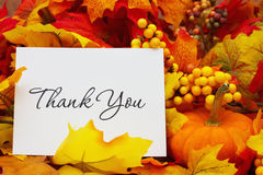 Thank You. Autumn Leaves with sky background with text Royalty Free Stock Photos