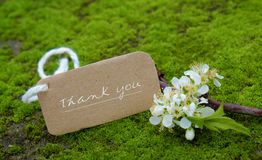 Thank you background, white flower. Thank you background on green moss, message for gratitude, beautiful white plum flower on green background with thankyou text royalty free stock photography