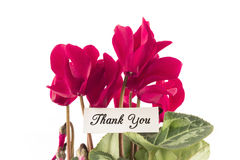 Thank You Card with Bouquet of Cyclamens Royalty Free Stock Photography