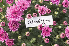 Thank You Card with Bouquet of Pink Chrysanthemums.  Stock Photography