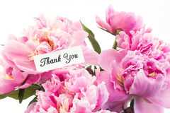 Thank You Card with Bouquet of Pink Peonies Stock Photography