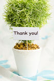 Thank you card. Decorative plant in pot with thank you card Royalty Free Stock Photography
