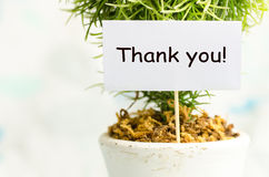 Thank you card. Decorative plant in pot with thank you card Royalty Free Stock Photos