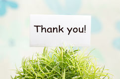 Thank you card. Decorative plant in pot with thank you card Royalty Free Stock Image