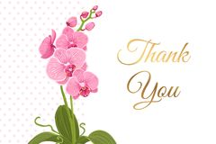 Thank you card pink orchid phalaenopsis flower. Courtesy thank you card template. Bright pink purple exotic orchid phalaenopsis flower plant greenery. Isolated Royalty Free Stock Images