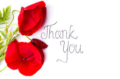 Thank you card with red poppy flowers. On white Royalty Free Stock Image