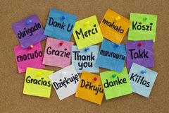Thank you in different languages. Thank you in sixteen languages - colorful sticky notes with handwriting on cork bulletin board Stock Photography