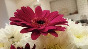 Thank you flowers Stock Photo