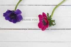 Thank you with flowers. A metal thank you sign enhanced by purple and pink anemones on white wooden boards , simple composition Royalty Free Stock Images
