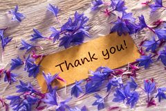 Thank you. In looking memo on white wood with beautiful blue flowers around royalty free stock image